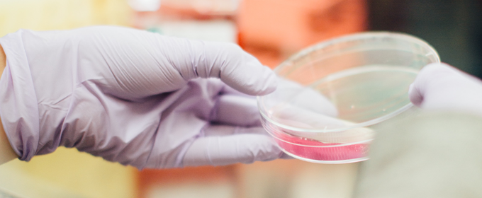 gloved hands holding petri dish